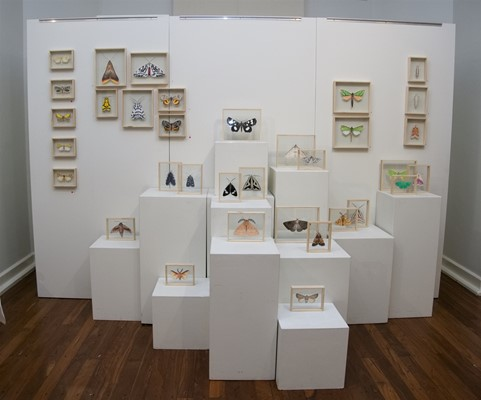 Image Gallery V1 - Chelsea Hopkins-Allan (Moth Exhibition)